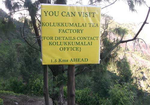 kolukkumalai-tea-plantation