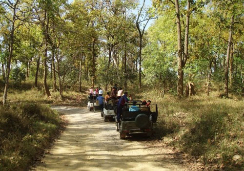 jim-corbett-jungle--safari