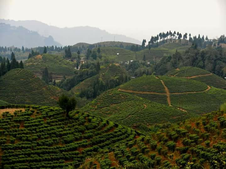 darjeeling-travel