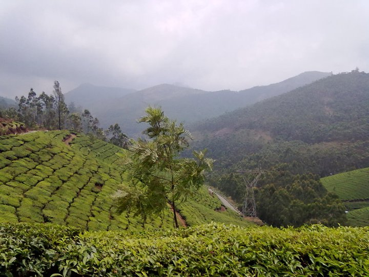 Munnar Hill Travel Kerala